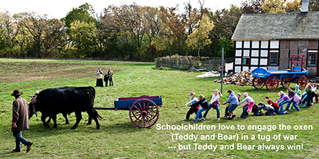 A group of schoolchildren on a field trip enjoy a tug of war with Teddy and Bear, Old World oxen while their teacher and parent chaperone watch and photograph the event. Photo taken in the German area at the at the 1860 Schulz farm.